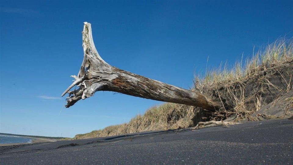 Un exemple de l'érosion des berges en Côte-Nord.