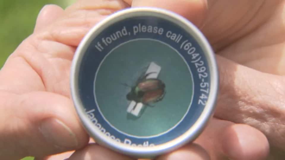 Accessoire de l'Agence canadienne d'inspection des aliments montrant un scarabée japonais en conserve et un numéro à appeler si vous en trouvez un.