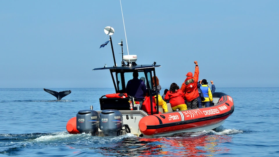 Les Entreprises Essipit proposent des croisières aux baleines dans l'estuaire du Saint-Laurent.