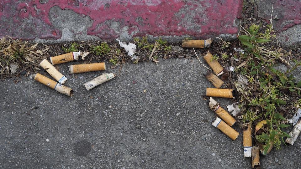 Des mégots de cigarettes