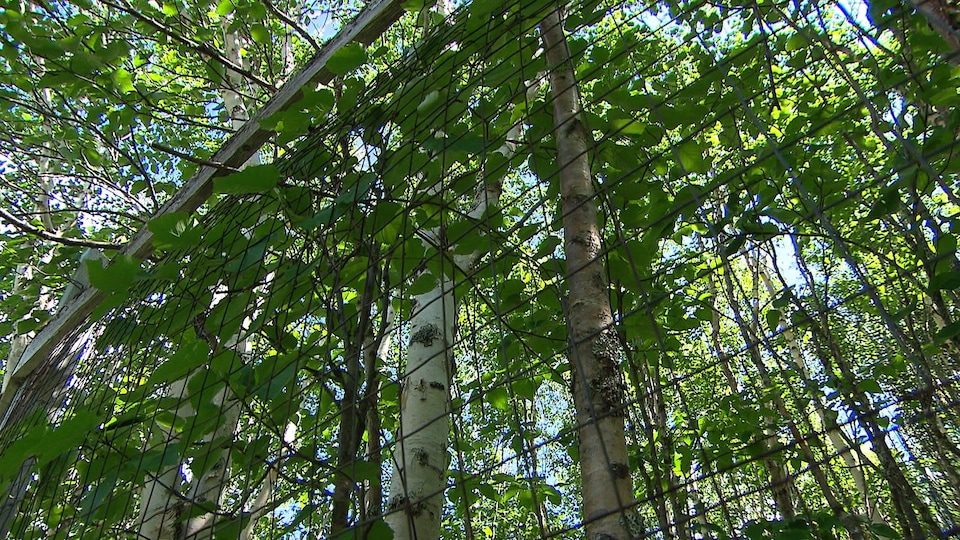 Une clôture dans une forêt