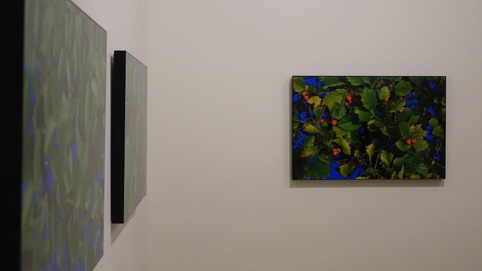 Trois tableaux au mur.