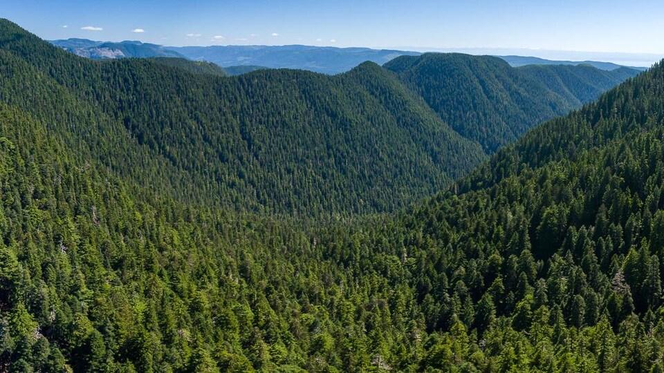 Des montagnes couvertes de forêts.