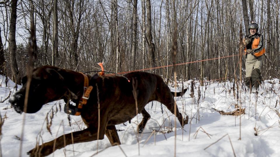 On voit la chienne qui marche dans forêt enneigée. Derrière, son maître qui la tient en laisse et la suit.