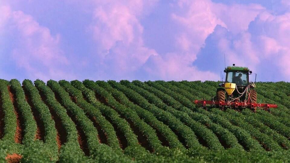 Un tracteur dans un champ sous un ciel mauve.