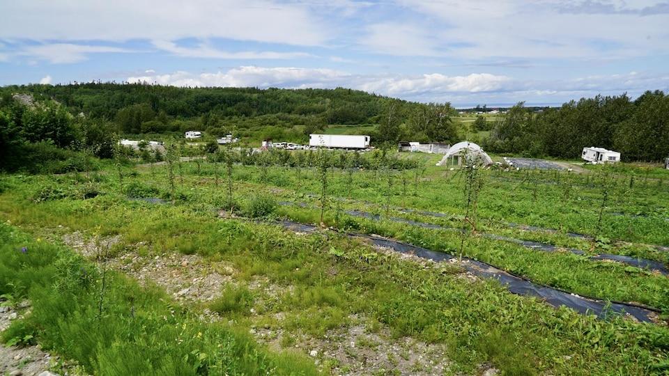 Un champ où poussent des légumes.