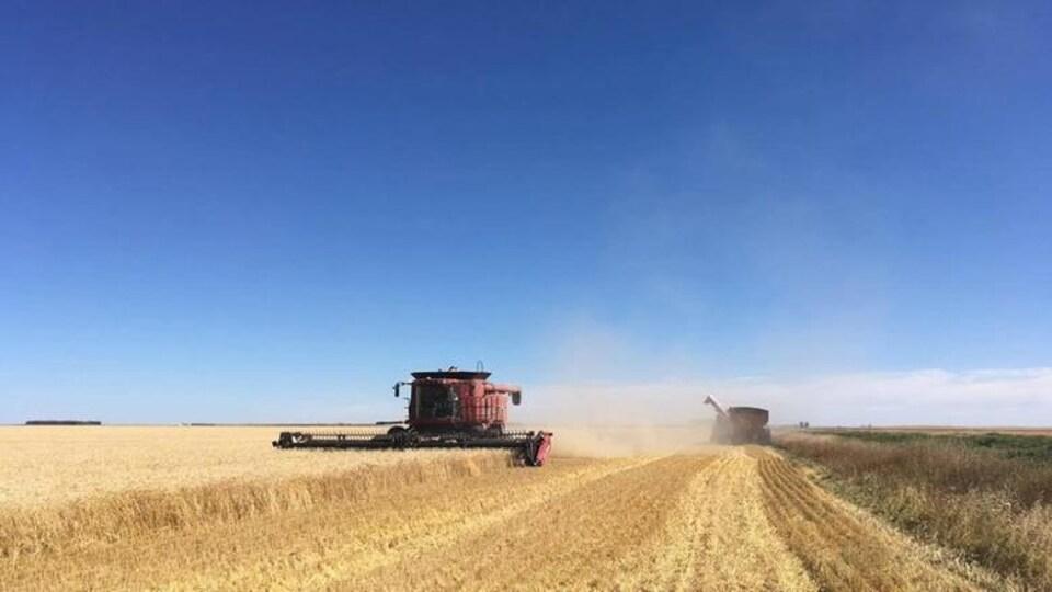 De la machinerie agricole dans un champ de blé.