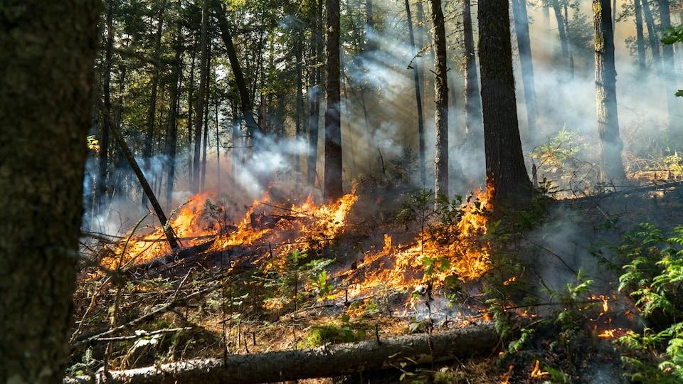 On voit un feu de forêt contrôlé au parc de la Mauricie. Les flammes s'élèvent et la fumée envahit le sous-bois.