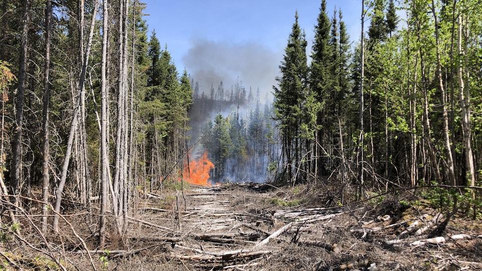 Des flammes dans la forêt.