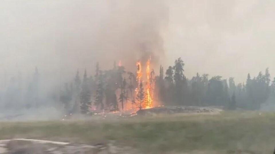 Des flammes et de la fumée visibles dans des conifères.