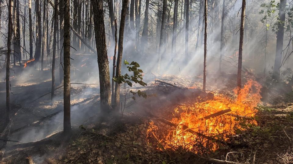 Quelques branches sont en feu dans une forêt alors que la fumée des flammes est en train de se répandre.