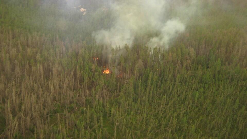 Des flammes aperçues du haut des airs dans une forêt.