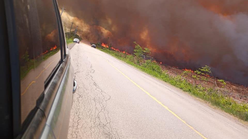 Un feu de forêt sur le bord d'une route.
