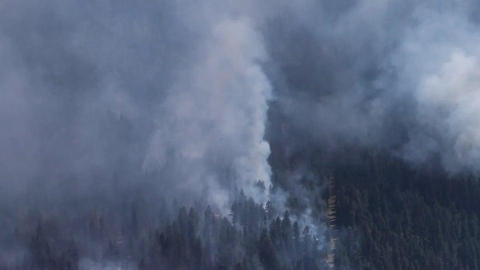 De la fumée épaisse se dégageant d'une forêt de conifères.