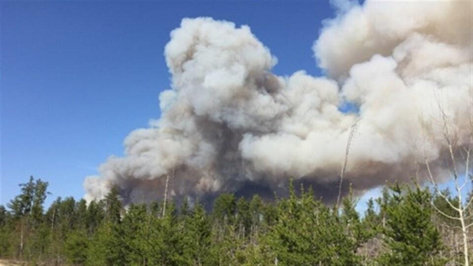 La fumée d'un feu de forêt est visible par-dessus la cime des arbres