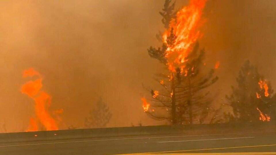 Un arbre englouti par des flammes.