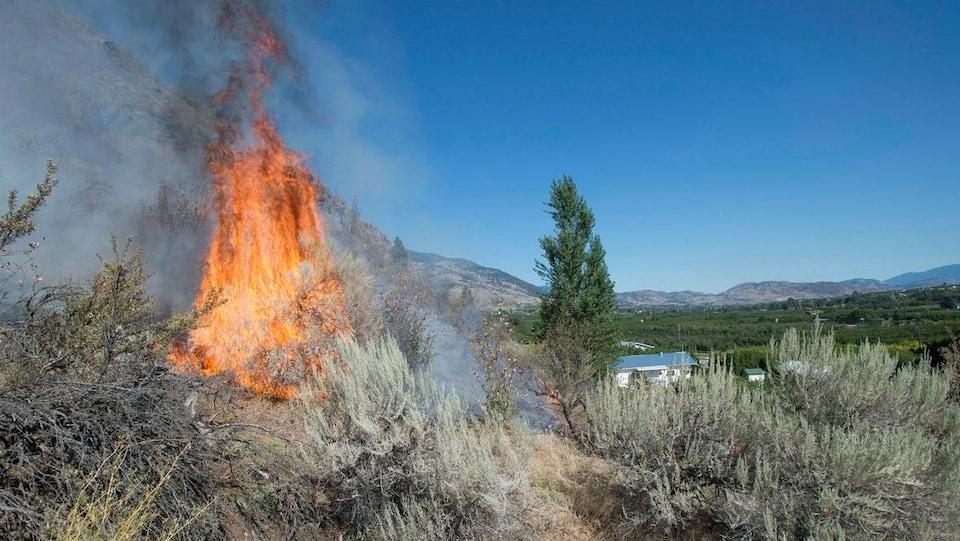 Des broussailles prennent feu dans une vallée.