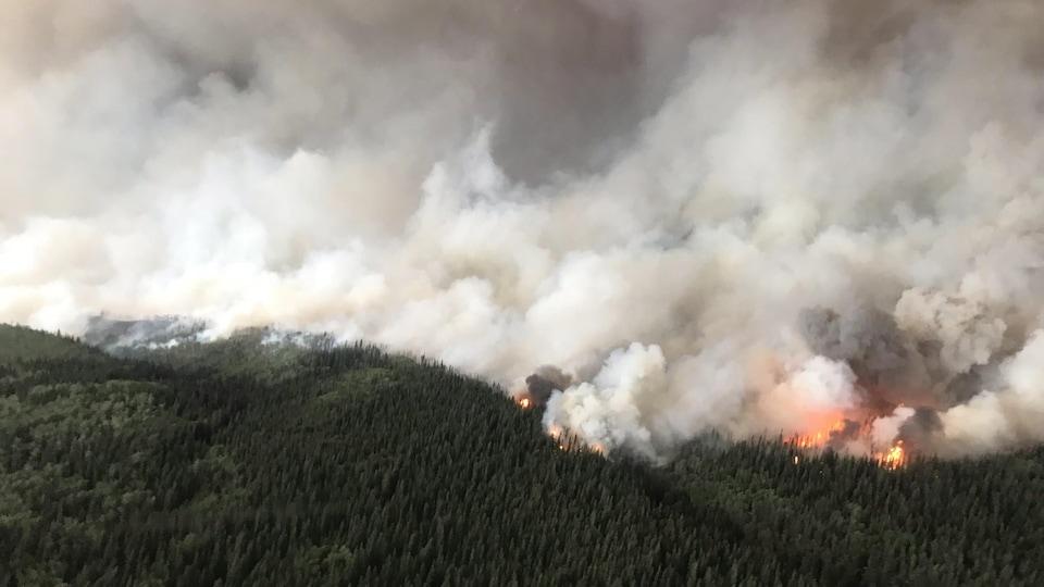 Vue aérienne d'une forêt en feu sous un panache de fumée.