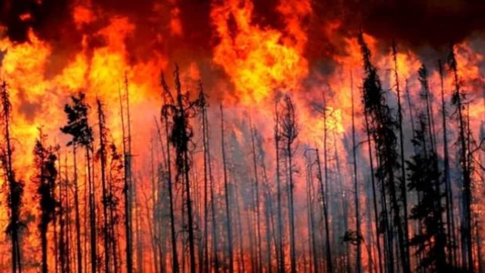 Des flammes attaquent une forêt en Colombie-Britannique