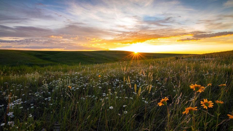 Un champ des prairies avec un coucher du soleil à l'horizon.