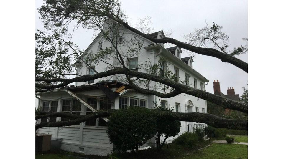 Une maison a été frappée par un arbre lors de la chute de celui-ci.