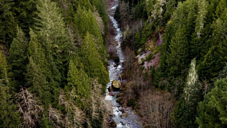 Un ruisseau dans une forêt.