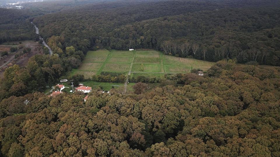Vue aérienne d'une forêt.