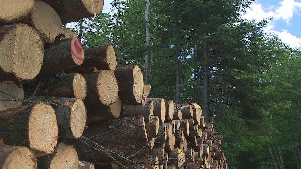 Des cordes de bois en forêt.