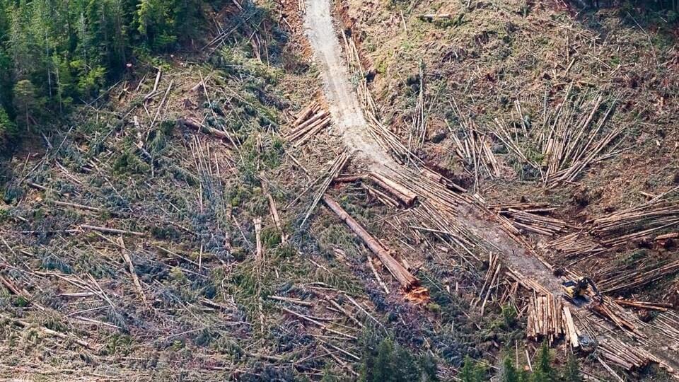Des troncs d'arbres abattus, dont certains très gros, jonchent le sol, vus du ciel.