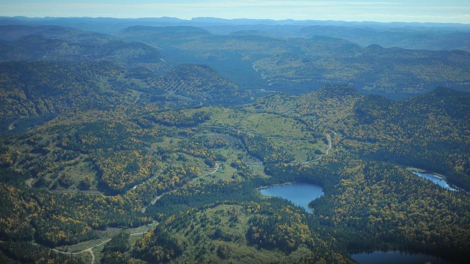 Vue aérienne de zones forestières où des coupes ont été réalisées.
