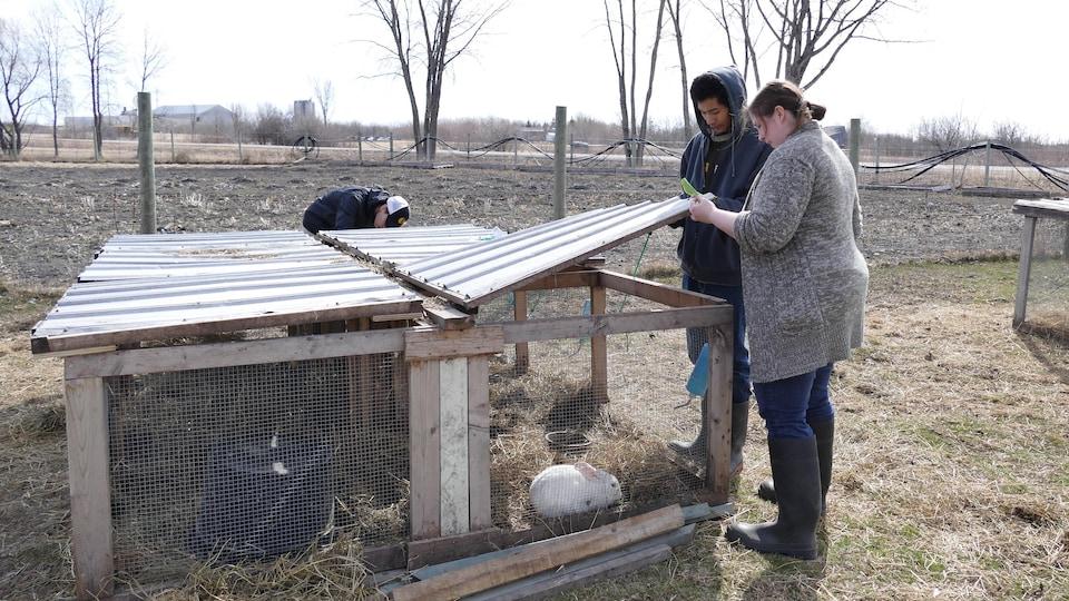 Deux personnes ouvrent la cage de lapin.