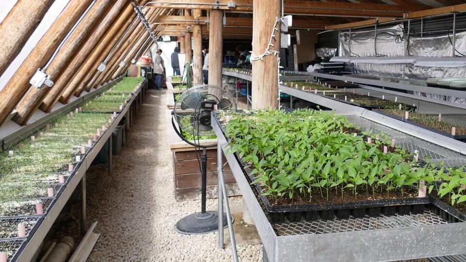 L'intérieur d'une serre avec beaucoup de jeunes plants qui poussent.