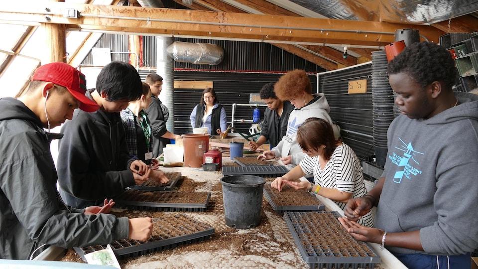 Huit jeunes dans une serre plantent des graines dans des contenants de terre noire.