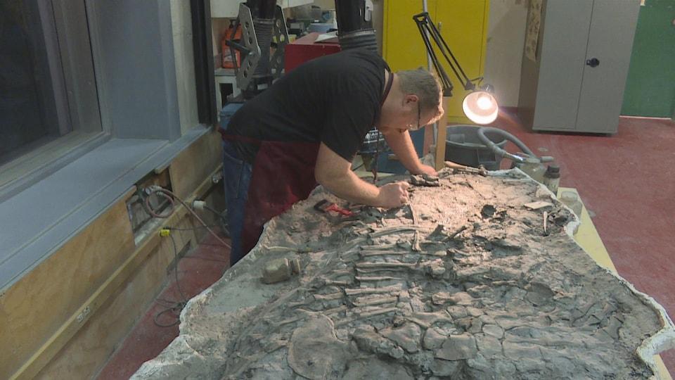 Un homme gratte un animal fossilisé.