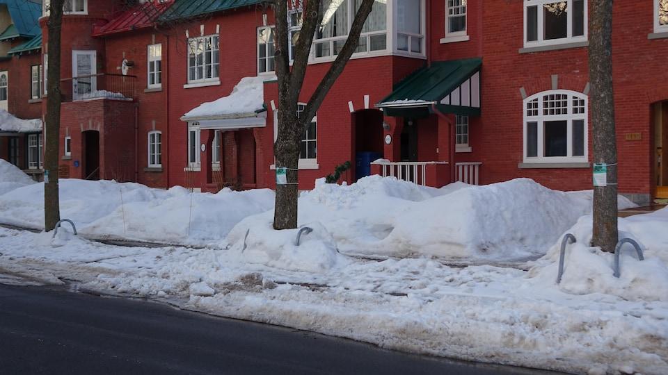 Trois frênes marqués pour l'abattage sur la rue du Parc à Québec.