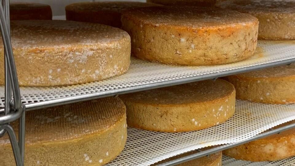 Des fromages fins vieillissant sur des tablettes.