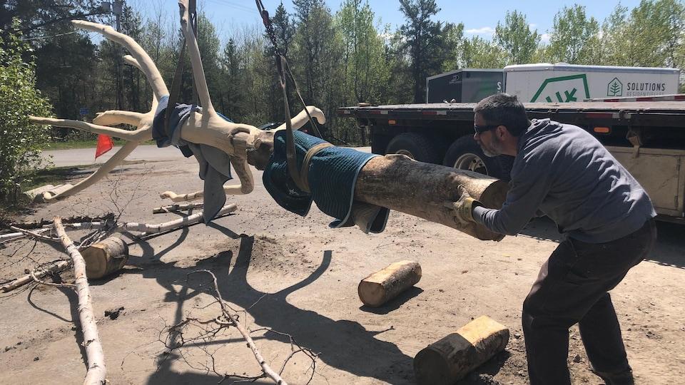 Un homme en train d'installer un arbre.