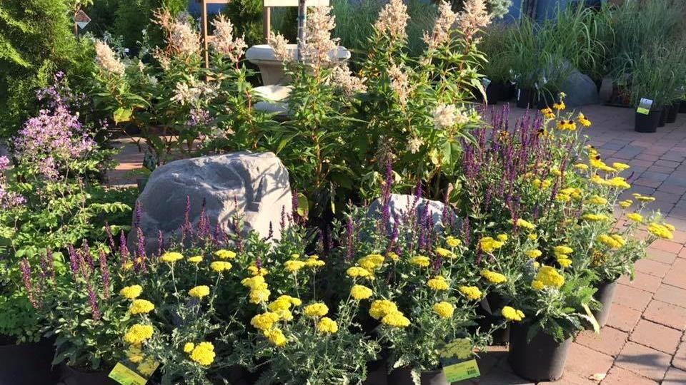 Des fleurs et des plantes en pots dans un centre de jardinage.