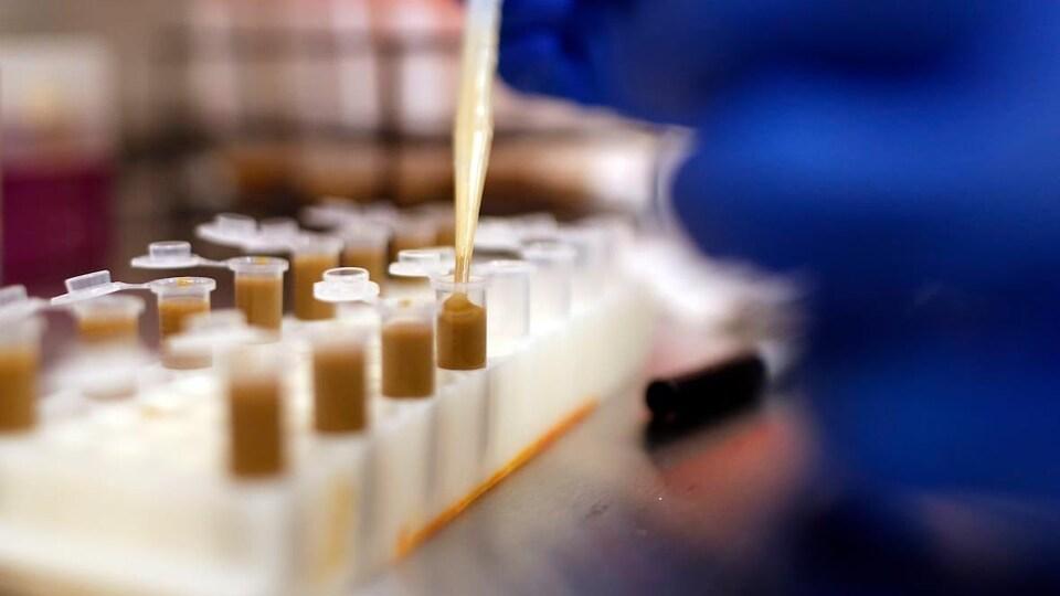 Des tubes à essai sont en train d'être remplis d'une substance brune.
