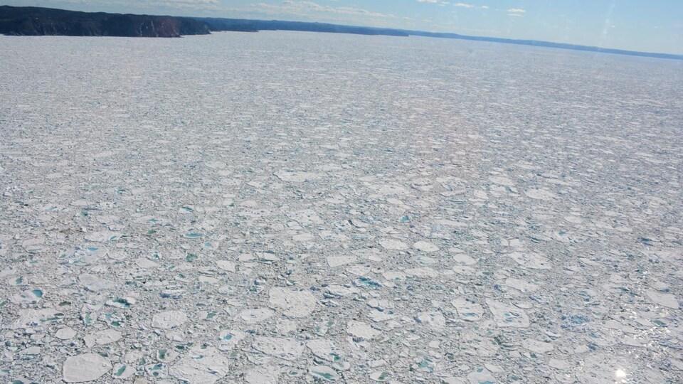 Glace abondante dans les eaux au large de Terre-Neuve