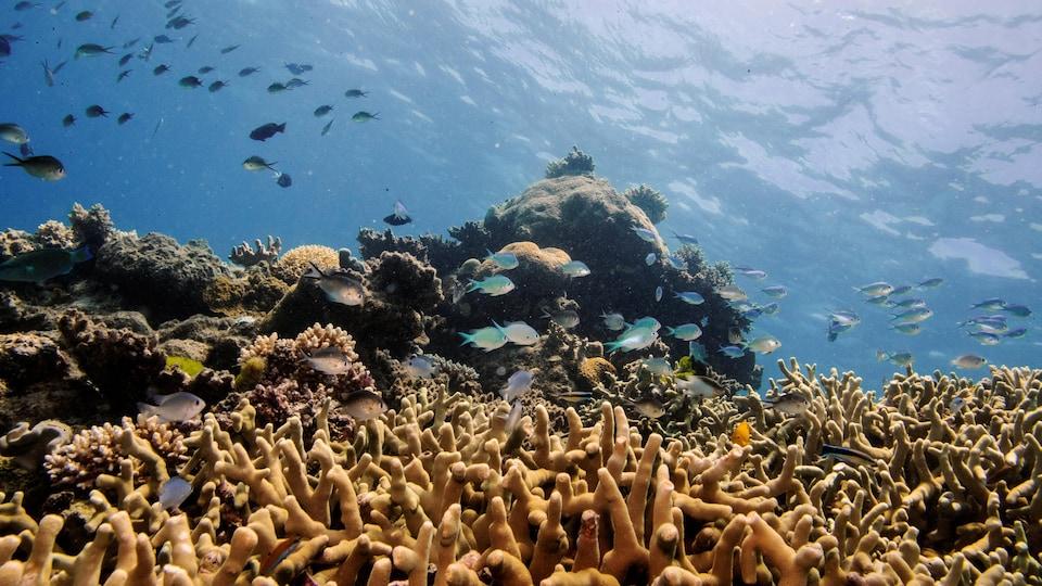 La Grande Barrière de Corail au large de Cairns, en Australie.