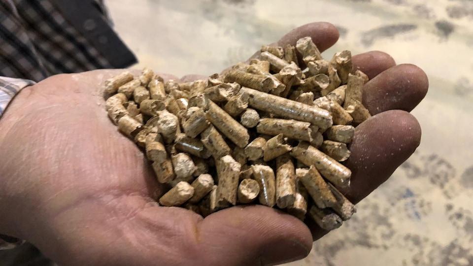 Granules de bois dans une main