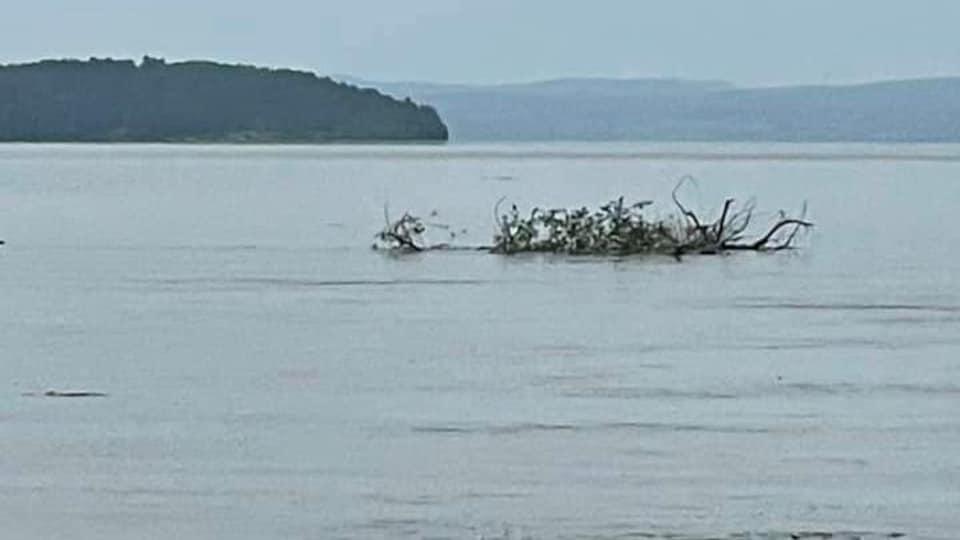 Des branches d'Arbre flottent à la surface de l'eau.