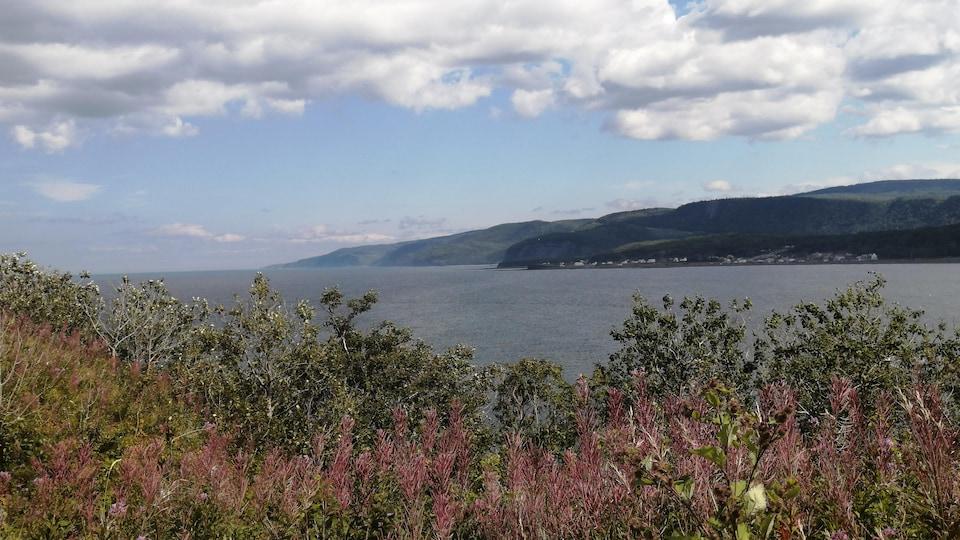 Le fleuve Saint-Laurent et les montagnes de la Gaspésie vus derrière des fleurs sauvages.