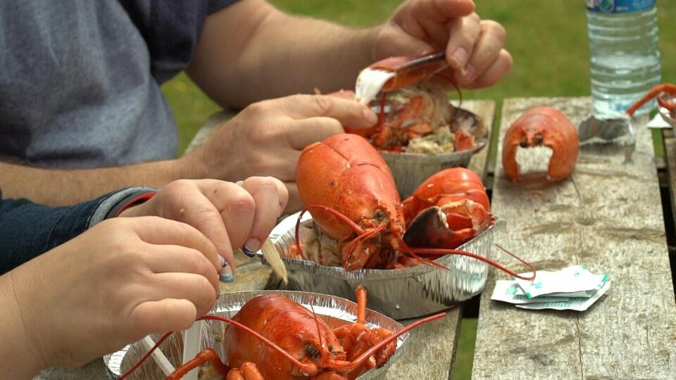 Des mains manipulent des homards cuits sur une table à pique-nique.