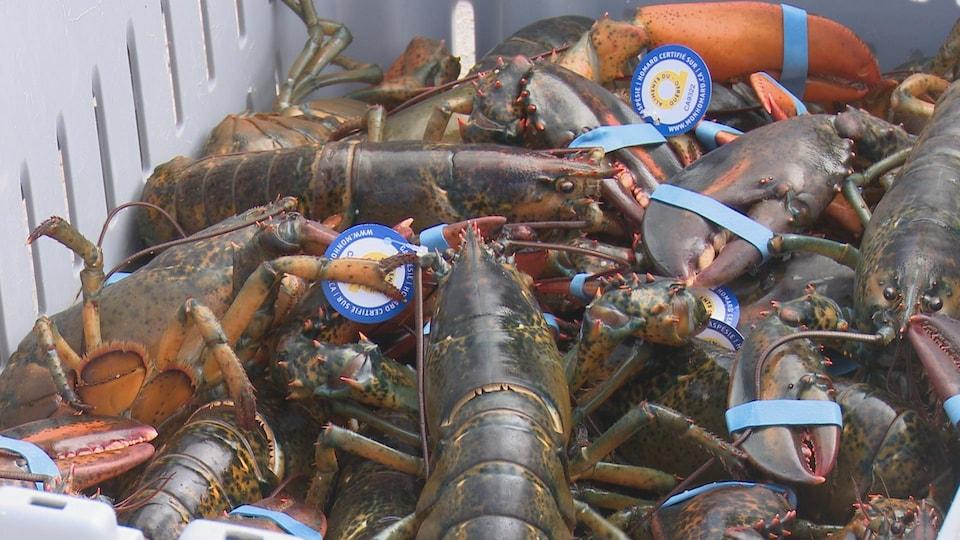 Des homards dans une caisse