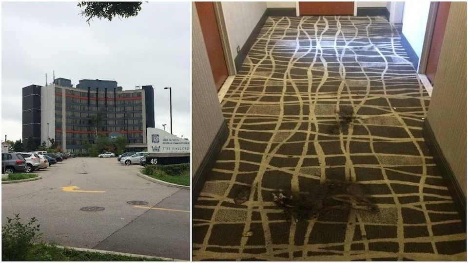 Une photo de l'extérieur d'un hôtel de plusieurs étages; une photo montrant un bout de tapis brun noirci par le feu.
