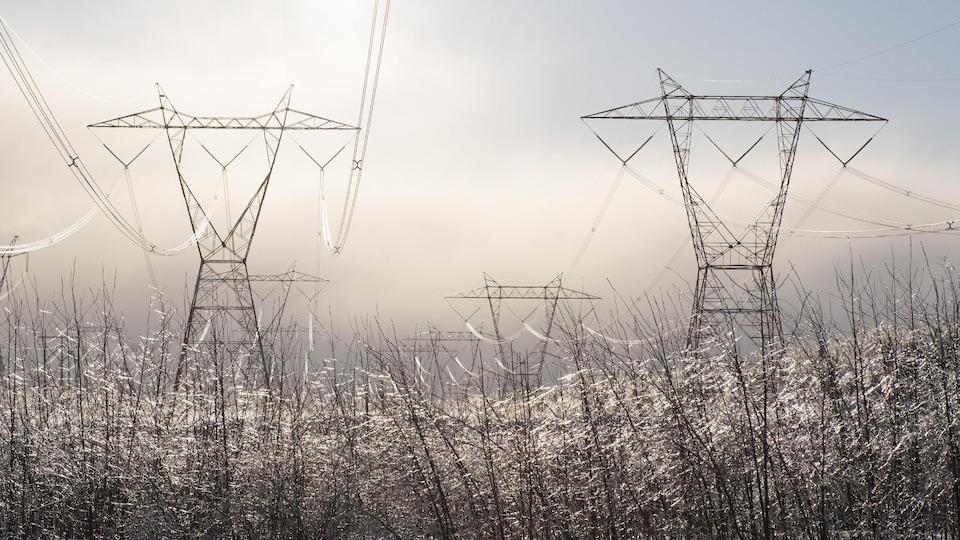 Des pylônes électriques surplombent une forêt dont les arbres sont couverts de givre.