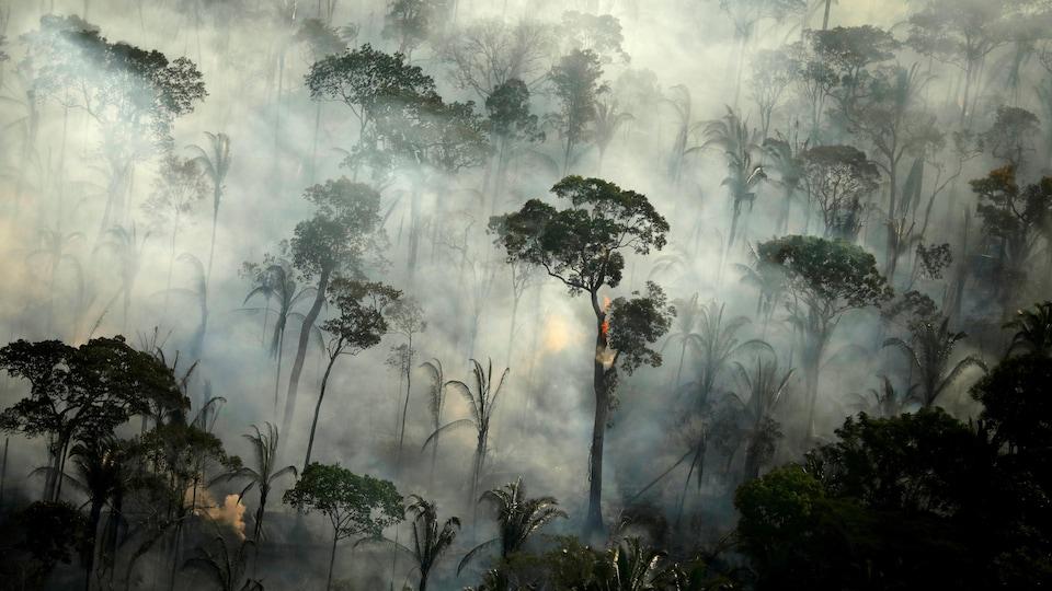 Des arbres brûlés, entourés de fumée.