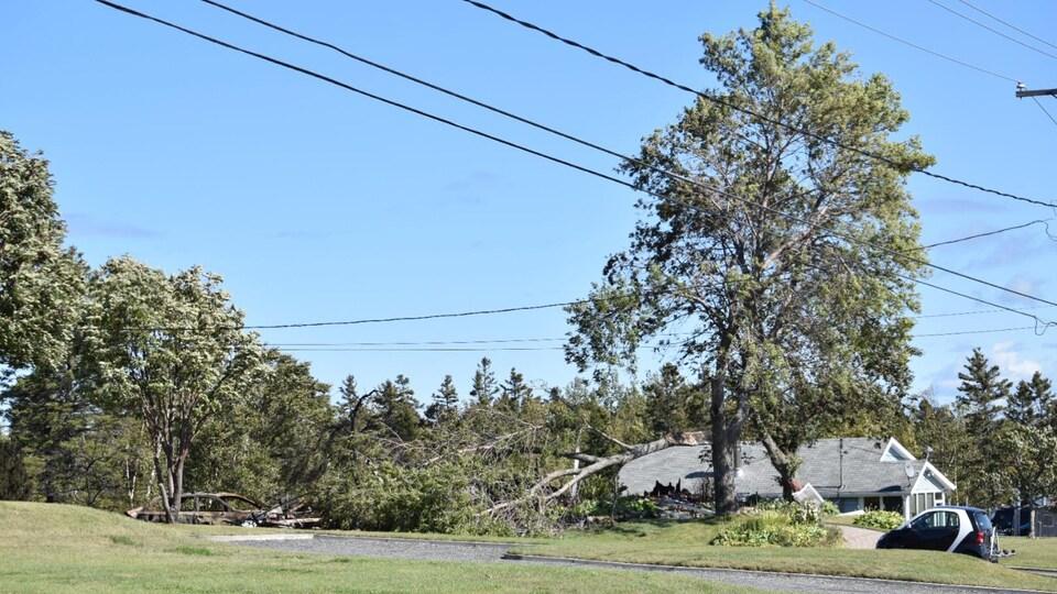 Un arbre cassé sur la maison montre la force du vent.